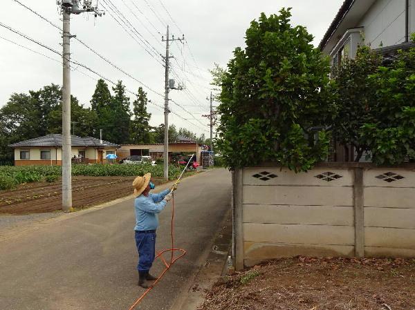庭木の消毒1