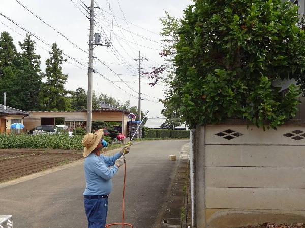 庭木の消毒2